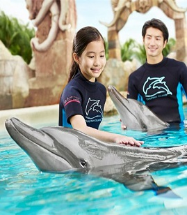 Dolphin Discovery 海豚探索